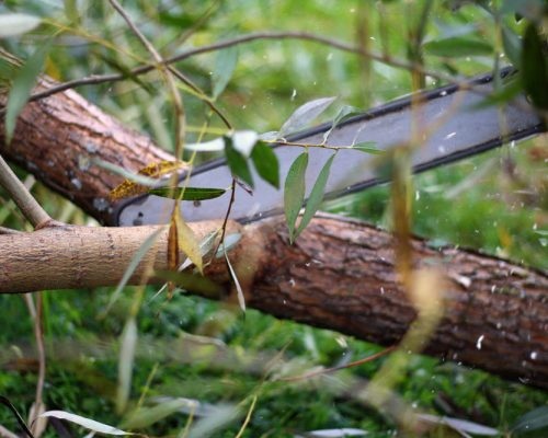 Tree Pruning – More Than A Tidy Trim